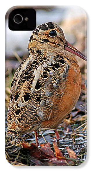 Timberdoodle The American Woodcock IPhone 4 / 4s Case by Timothy Flanigan