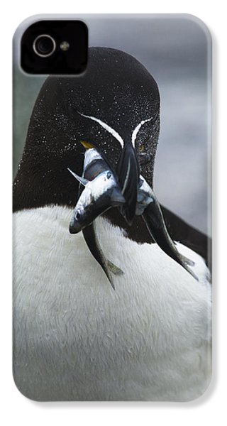 Feeding Time... IPhone 4 / 4s Case by Nina Stavlund