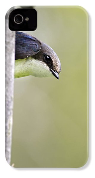 Tree Swallow Closeup IPhone 4 / 4s Case by Christina Rollo