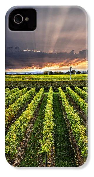 Vineyard At Sunset IPhone 4 / 4s Case by Elena Elisseeva