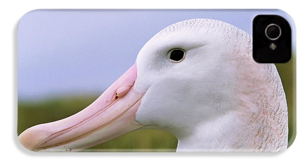 Wandering Albatross (diomendea Exulans IPhone 4 / 4s Case by Martin Zwick