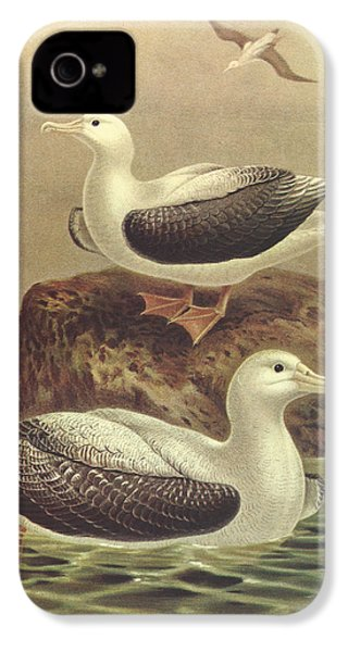 Wandering Albatross IPhone 4 / 4s Case by J G Keulemans