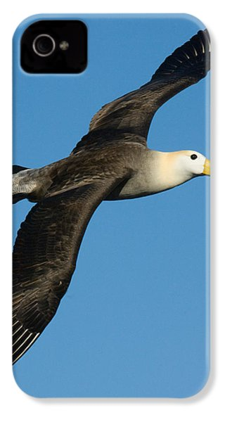 Waved Albatross Diomedea Irrorata IPhone 4 / 4s Case by Panoramic Images