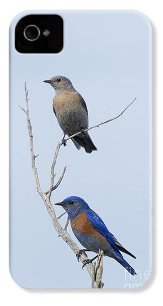 Western Bluebird Pair IPhone 4 / 4s Case by Mike  Dawson
