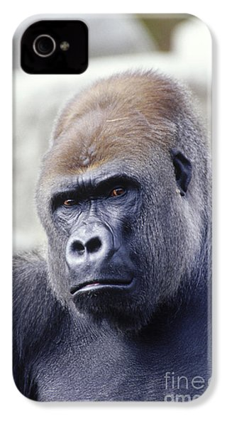 Western Lowland Gorilla IPhone 4 / 4s Case by Gregory G. Dimijian
