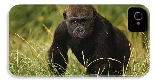 Western Lowland Gorilla Juvenile IPhone 4 / 4s Case by Gerry Ellis