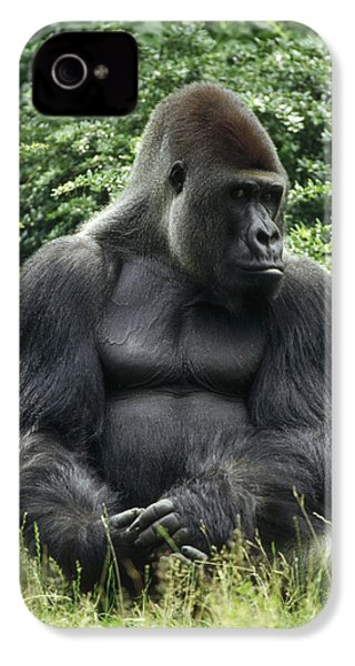 Western Lowland Gorilla Male IPhone 4 / 4s Case by Konrad Wothe