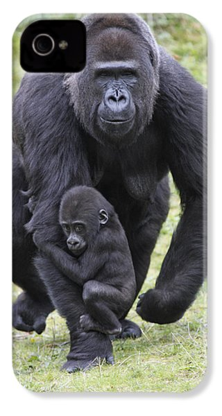 Western Lowland Gorilla Walking IPhone 4 / 4s Case by Duncan Usher