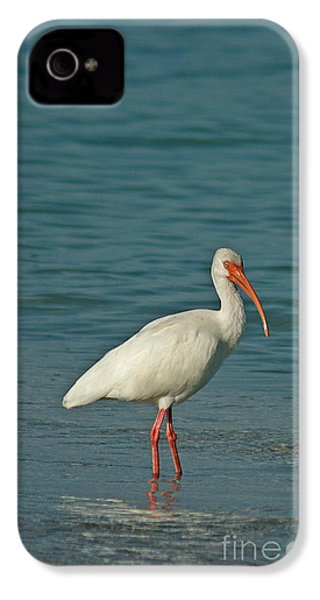 White Ibis IPhone 4 / 4s Case by Cindi Ressler