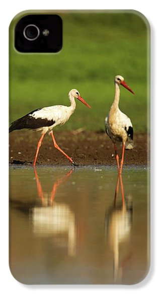 White Stork (ciconia Ciconia) IPhone 4 / 4s Case by Photostock-israel