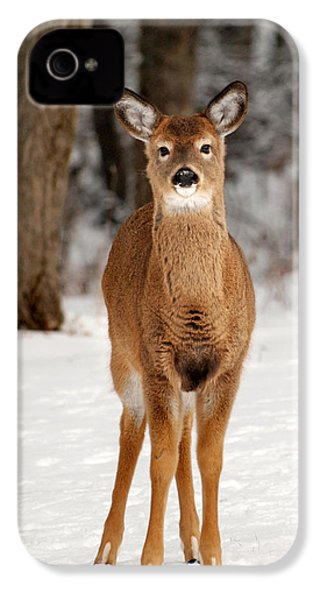 Whitetail In Snow IPhone 4 / 4s Case by Christina Rollo