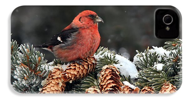 White-winged Crossbill IPhone 4 / 4s Case by Nick  Saunders