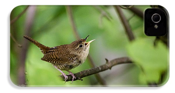 Wild Birds - House Wren IPhone 4 / 4s Case by Christina Rollo