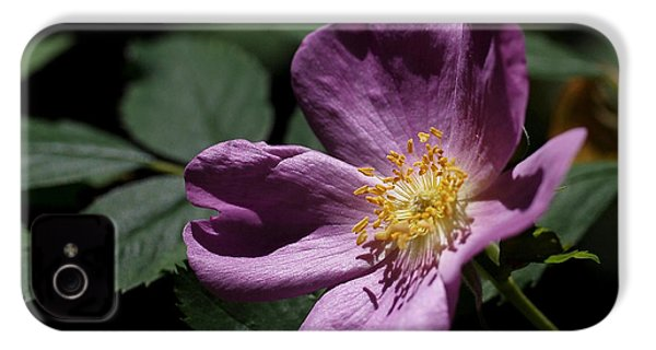 Wild Rose IPhone 4 / 4s Case by Rona Black