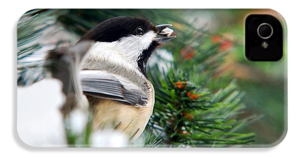Winter Chickadee With Seed IPhone 4 / 4s Case by Christina Rollo