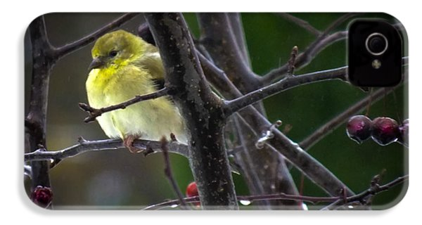 Yellow Finch IPhone 4 / 4s Case by Karen Wiles