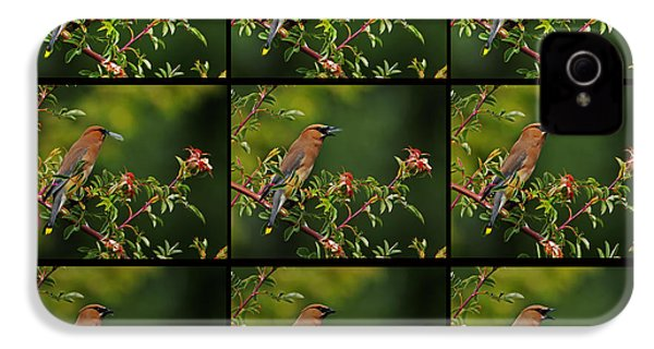 Cedar Wax Wing Having Lunch IPhone 4 / 4s Case by Jim Boardman