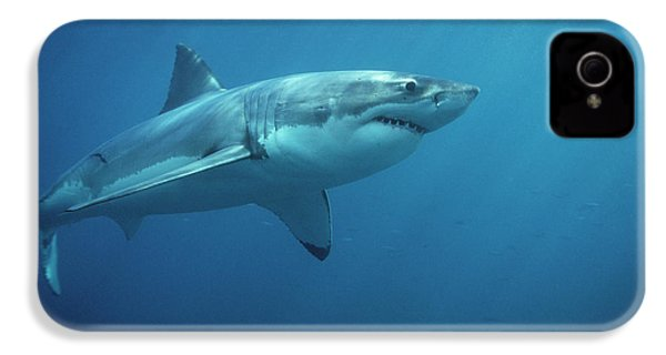 Great White Shark Carcharodon IPhone 4 / 4s Case by Mike Parry