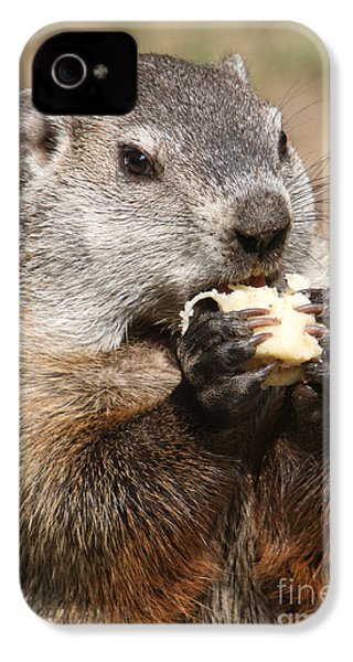 Animal - Woodchuck - Eating IPhone 4 / 4s Case by Paul Ward