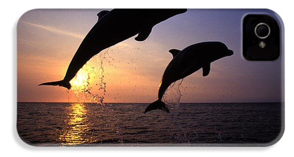 Bottlenose Dolphins IPhone 4 / 4s Case by Francois Gohier and Photo Researchers