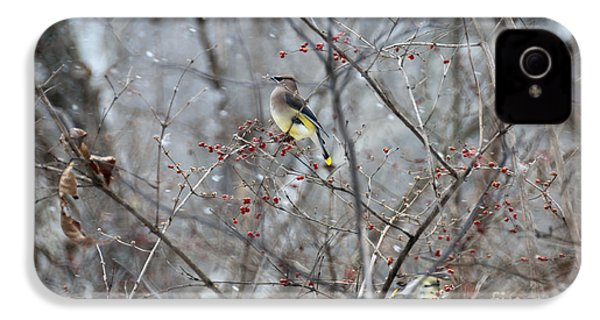 Cedar Wax Wing 3 IPhone 4 / 4s Case by David Arment