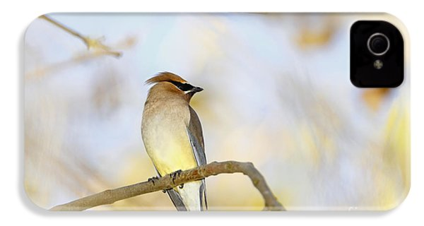 Cedar Waxwing On Yellow And Blue IPhone 4 / 4s Case by Susan Gary