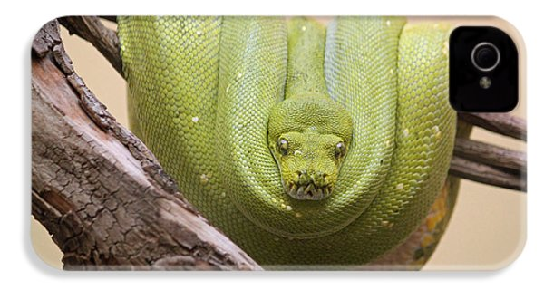 Green Tree Python IPhone 4 / 4s Case by Suzanne Gaff