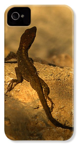 Leapin' Lizards IPhone 4 / 4s Case by Trish Tritz