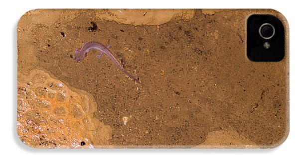 Ozark Blind Cave Salamander IPhone 4 / 4s Case by Dante Fenolio