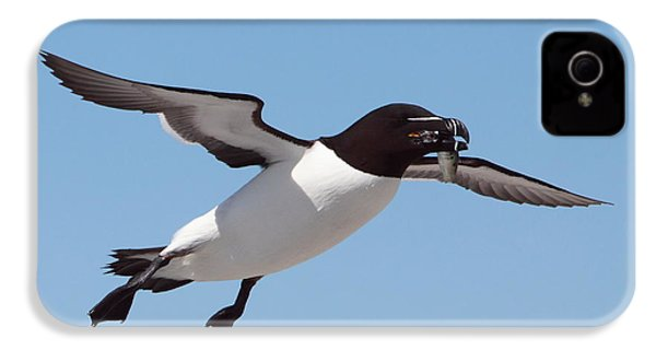 Razorbill In Flight IPhone 4 / 4s Case by Bruce J Robinson