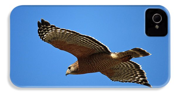 Red Shouldered Hawk In Flight IPhone 4 / 4s Case by Carol Groenen