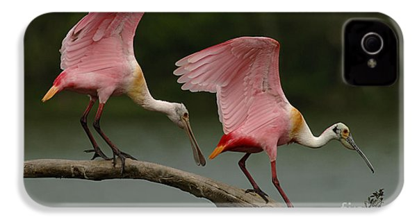 Rosiette Spoonbills IPhone 4 / 4s Case by Bob Christopher