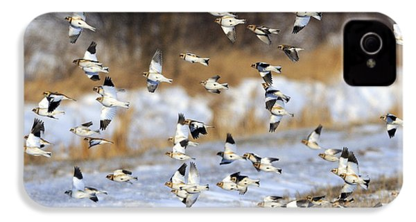 Snow Buntings IPhone 4 / 4s Case by Tony Beck