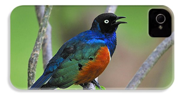 Superb Starling IPhone 4 / 4s Case by Tony Beck