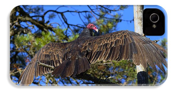 Turkey Vulture With Wings Spread IPhone 4 / 4s Case by Sharon Talson