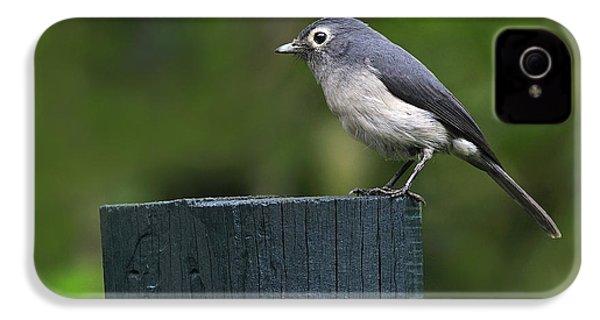 White-eyed Slaty Flycatcher IPhone 4 / 4s Case by Tony Beck