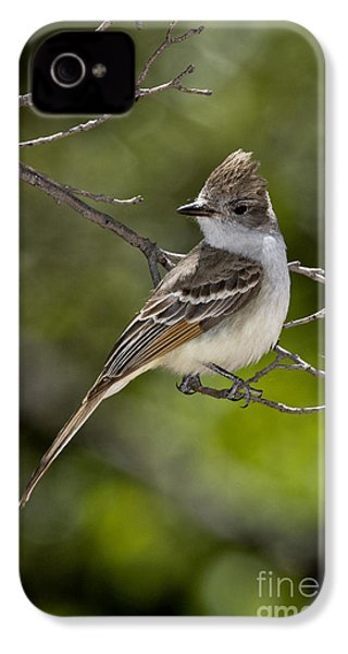 Ash-throated Flycatcher IPhone 4 / 4s Case by Anthony Mercieca