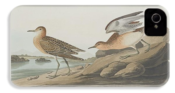 Buff-breasted Sandpiper IPhone 4 / 4s Case by John James Audubon