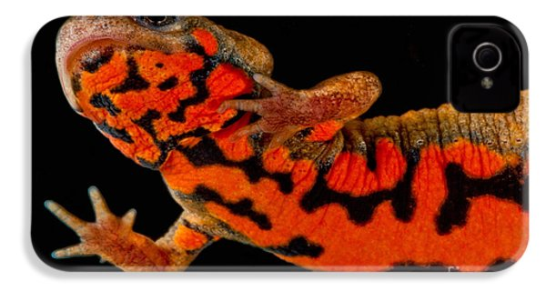 Chuxiong Fire Belly Newt IPhone 4 / 4s Case by Dant� Fenolio