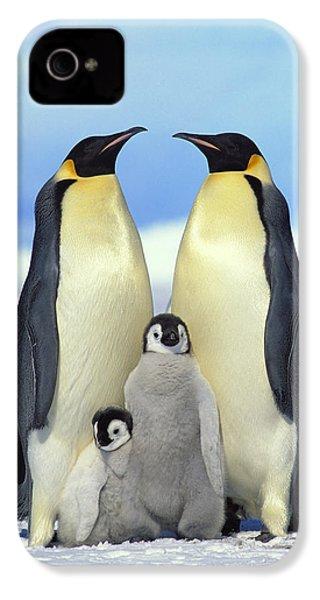 Emperor Penguin Aptenodytes Forsteri IPhone 4 / 4s Case by Konrad Wothe