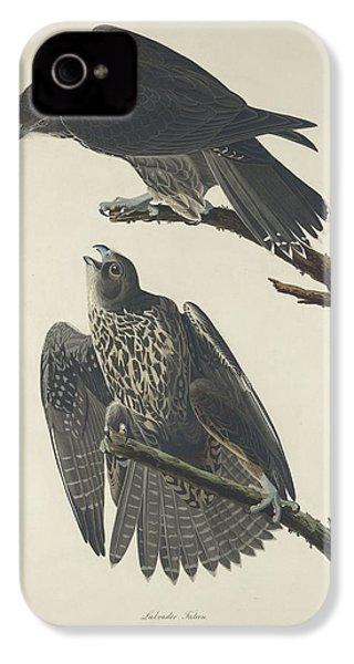 Labrador Falcon IPhone 4 / 4s Case by John James Audubon