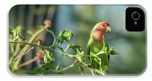 Lovely Little Lovebird  IPhone 4 / 4s Case by Saija Lehtonen