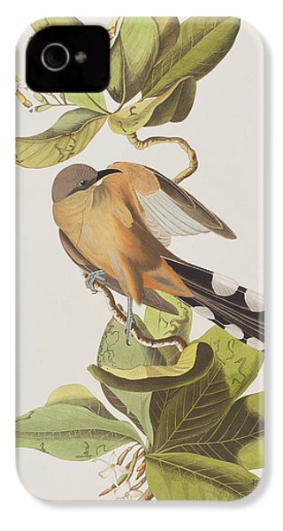 Mangrove Cuckoo IPhone 4 / 4s Case by John James Audubon