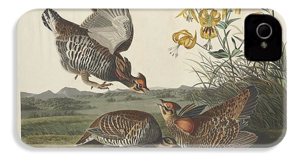 Pinnated Grouse IPhone 4 / 4s Case by John James Audubon