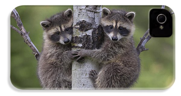 Raccoon Two Babies Climbing Tree North IPhone 4 / 4s Case by Tim Fitzharris