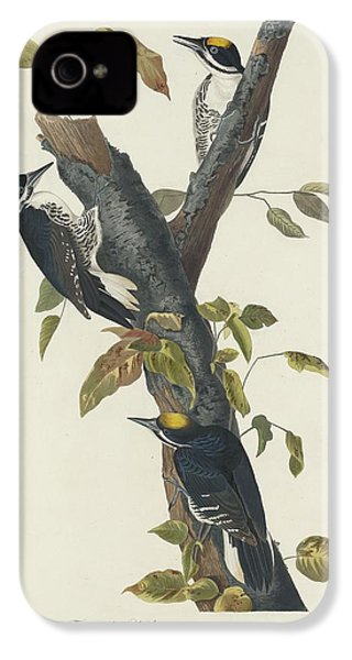 Three-toed Woodpecker IPhone 4 / 4s Case by John James Audubon