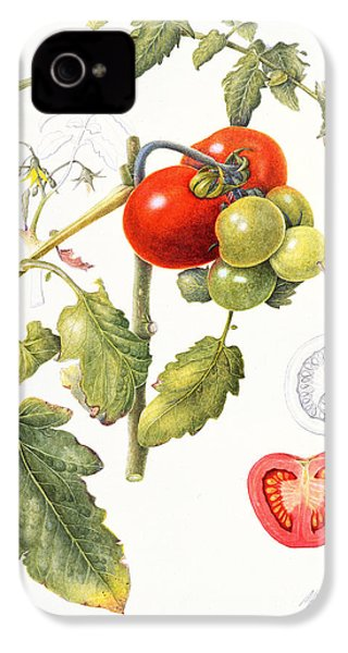 Tomatoes IPhone 4 / 4s Case by Margaret Ann Eden
