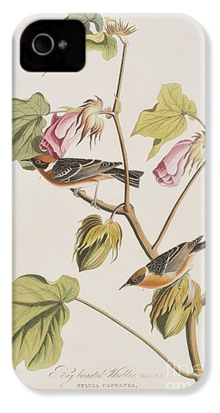 Bay Breasted Warbler IPhone 4 / 4s Case by John James Audubon