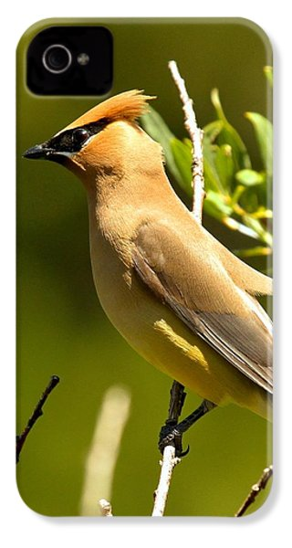 Cedar Waxwing Closeup IPhone 4 / 4s Case by Adam Jewell