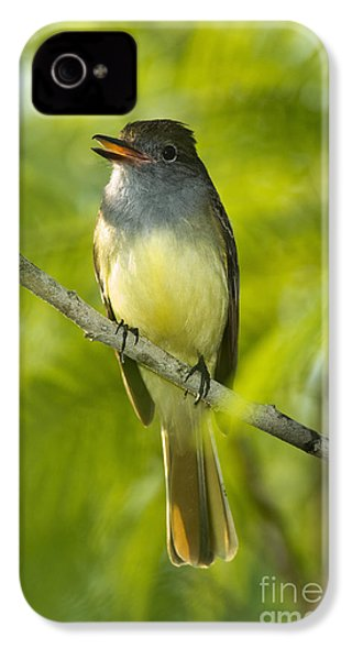 Great Crested Flycatcher IPhone 4 / 4s Case by Anthony Mercieca